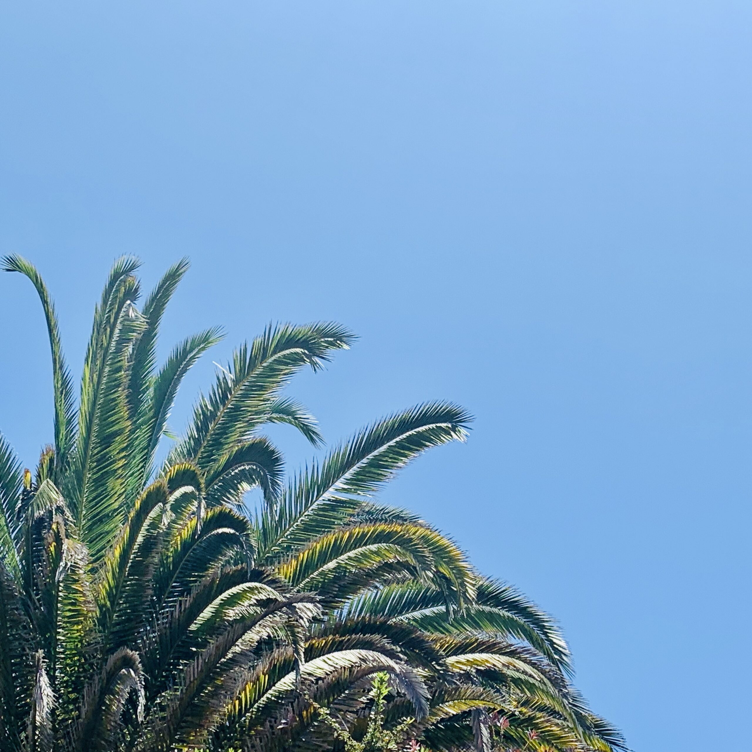 Vacation Sky | Graham Levine and Kelly Levine | Carlsbad Real Estate | Compass