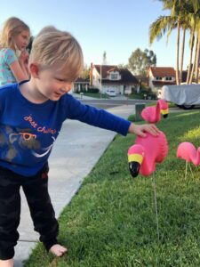 Carlsbad Flamingos | Flock Carlsbad | Graham and Kelly Levine